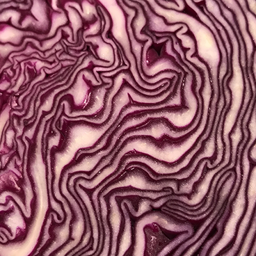 Red cabbage_©acfallen.png