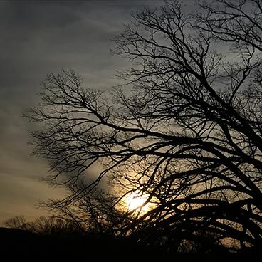 Solstice 1_©acfallen.png