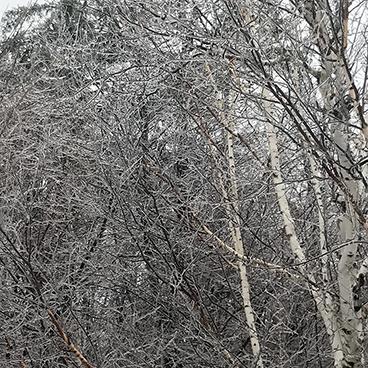 ice storm_©acfallen.png
