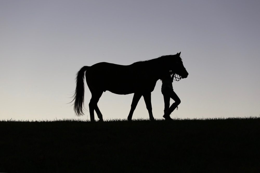 Equestrian -
