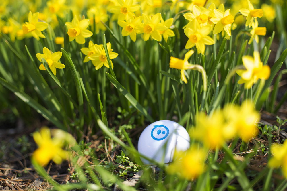 Daffodils and sphero.jpg