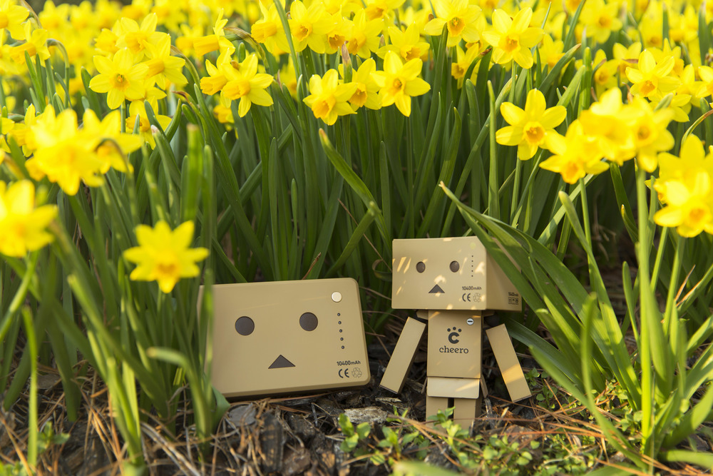 Hiding in the Flowers.jpg