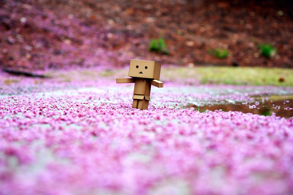 Day 15:365 - Pink Paradise.JPG