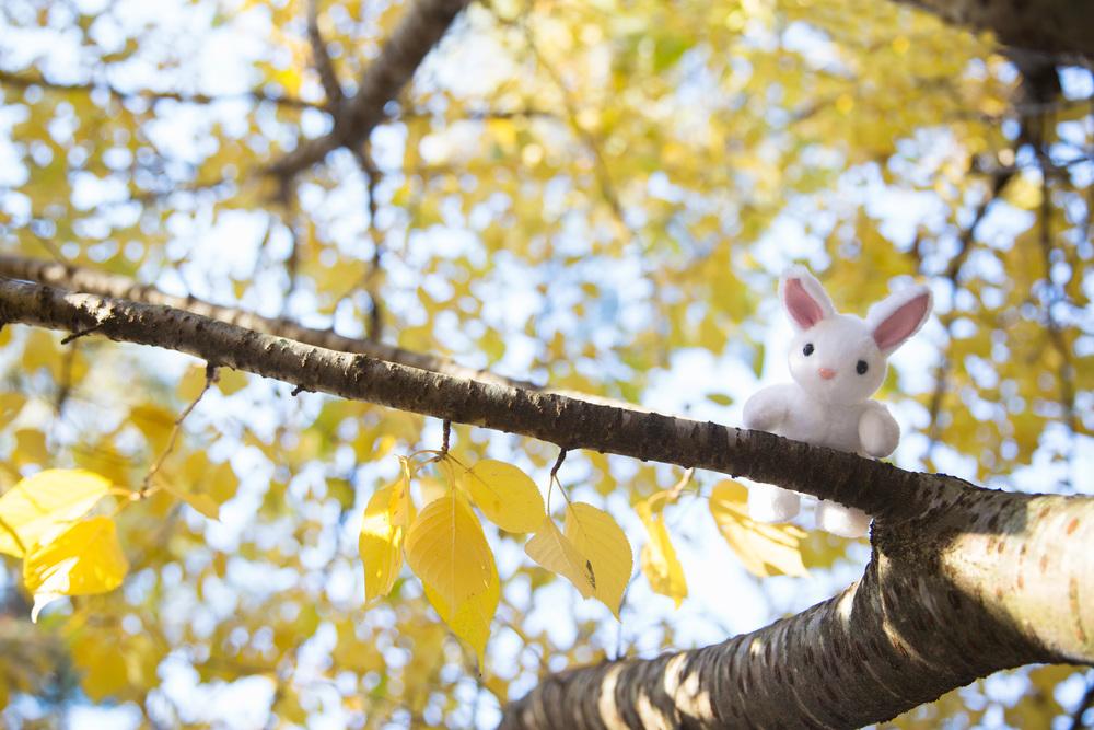 In Fall.jpg