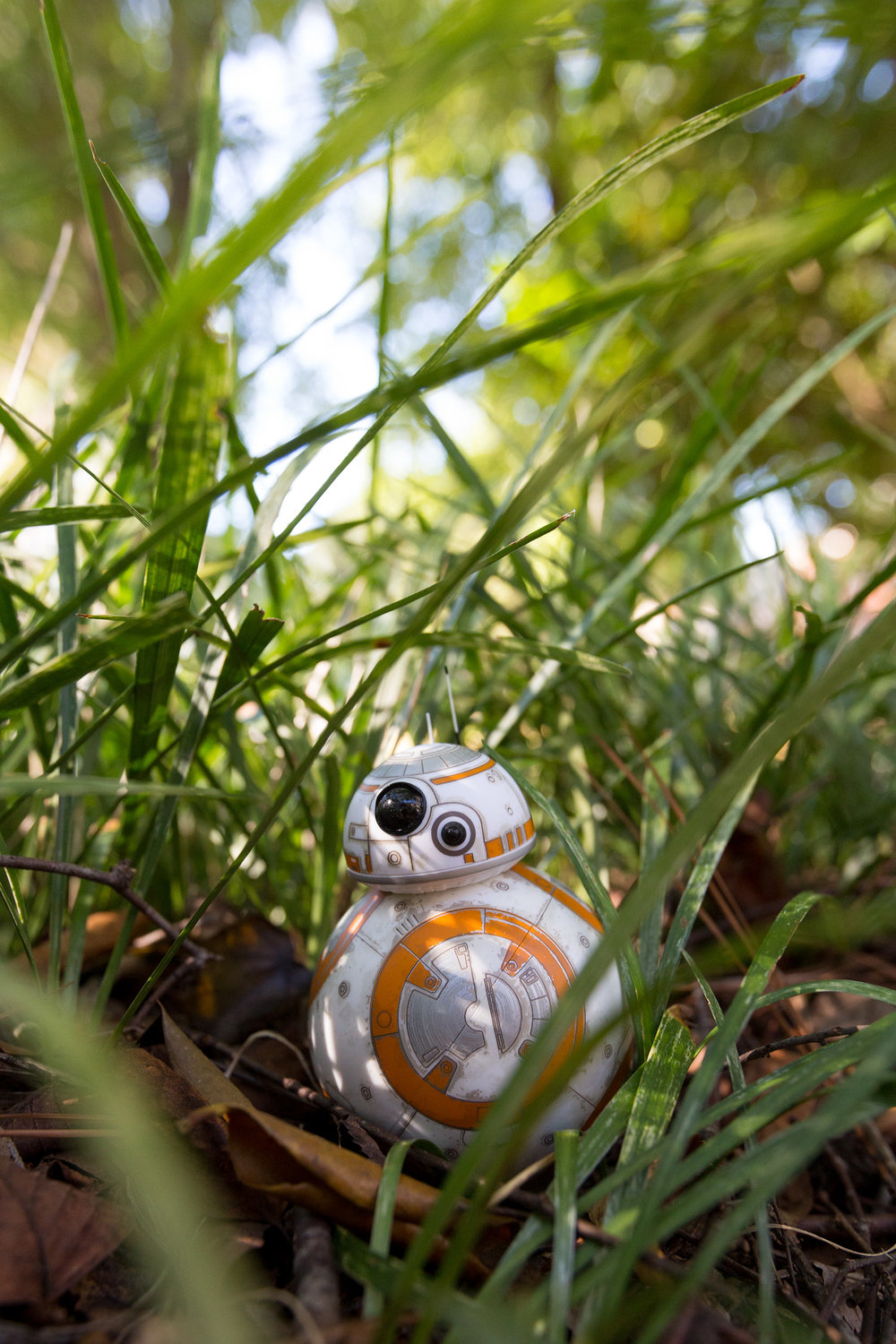 bb-8 rolling through.jpg