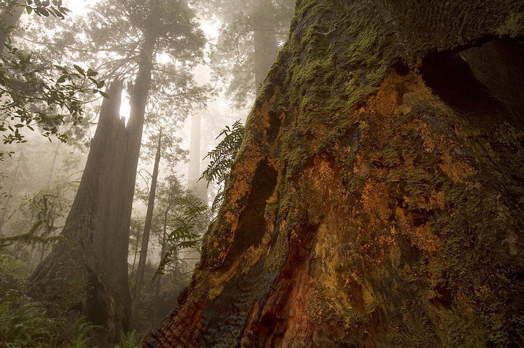 See how the tree expands and grows towards the light? The lifting momentum is Wood energy.