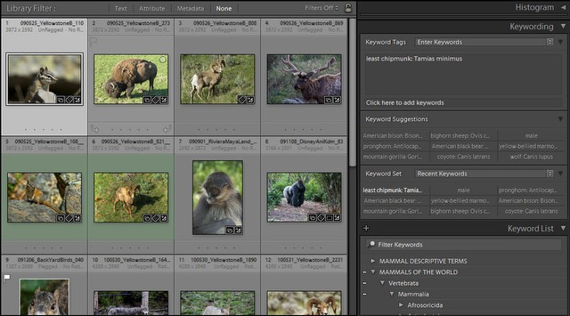Mammals of the World Keyword List used in Adobe Lightroom