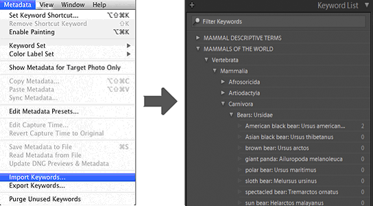Import Mammals of the World keywords into Lightroom and immediately have access to keywords for over 5,600 mammal species.