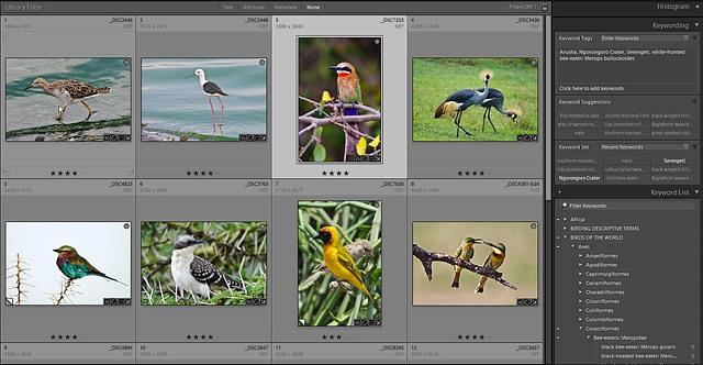 birdscreenshot640.jpg