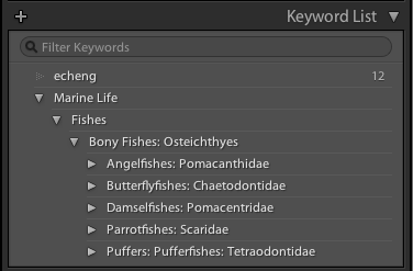 MarineLife Keywords Trial Version Screenshot