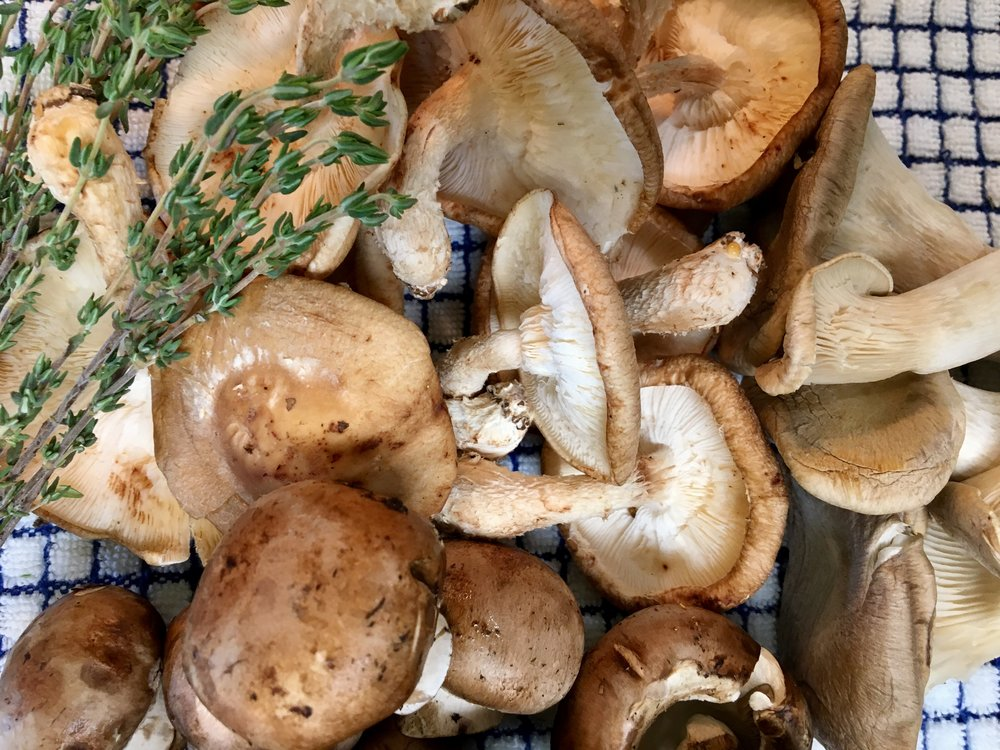 Crimini, Shiitake, and Oyster Mushrooms