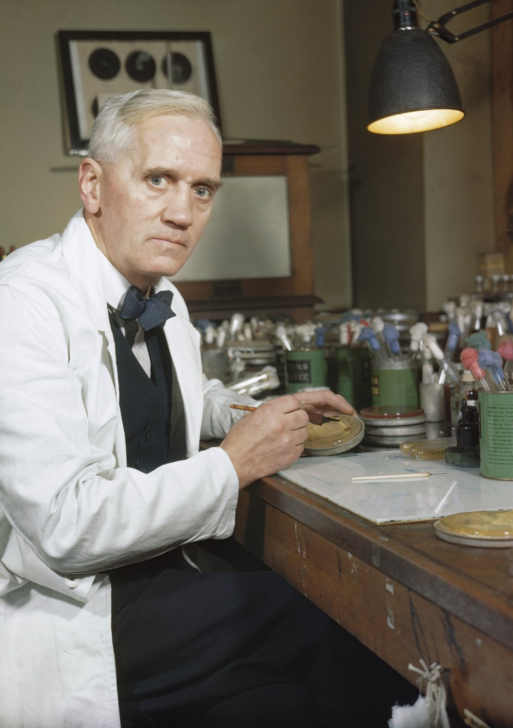 Sir Alexander Fleming, looking rather intense for the photographer  By Official photographer - http://media.iwm.org.uk/iwm/mediaLib//32/media-32192/large.jpgThis is photograph TR 1468 from the collections of the Imperial War Museums., Public Domain, https://commons.wikimedia.org/w/index.php?curid=24436974