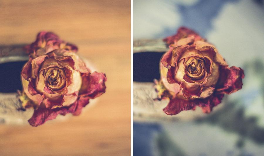 rosedying.jpg