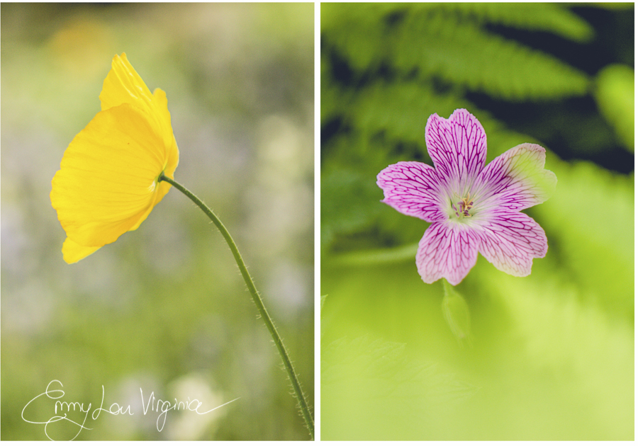 flowermacro2.jpg