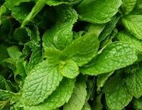 Mint leaves.jpg