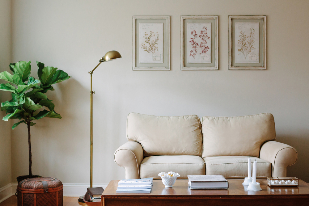 Fiddle Leaf Fig Tree and Botanical Prints