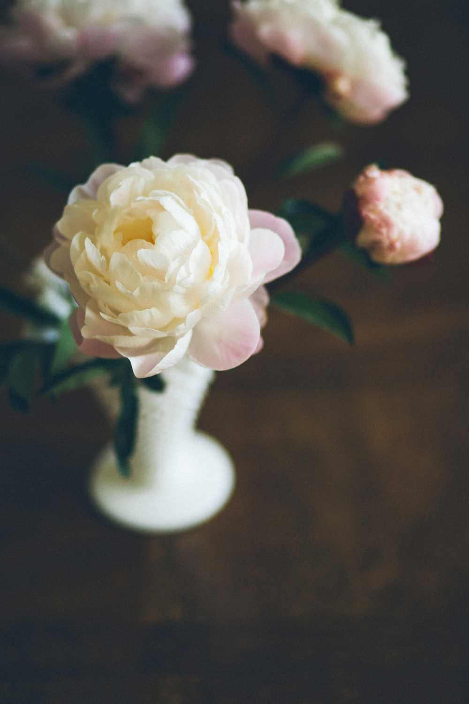 white pink peonies
