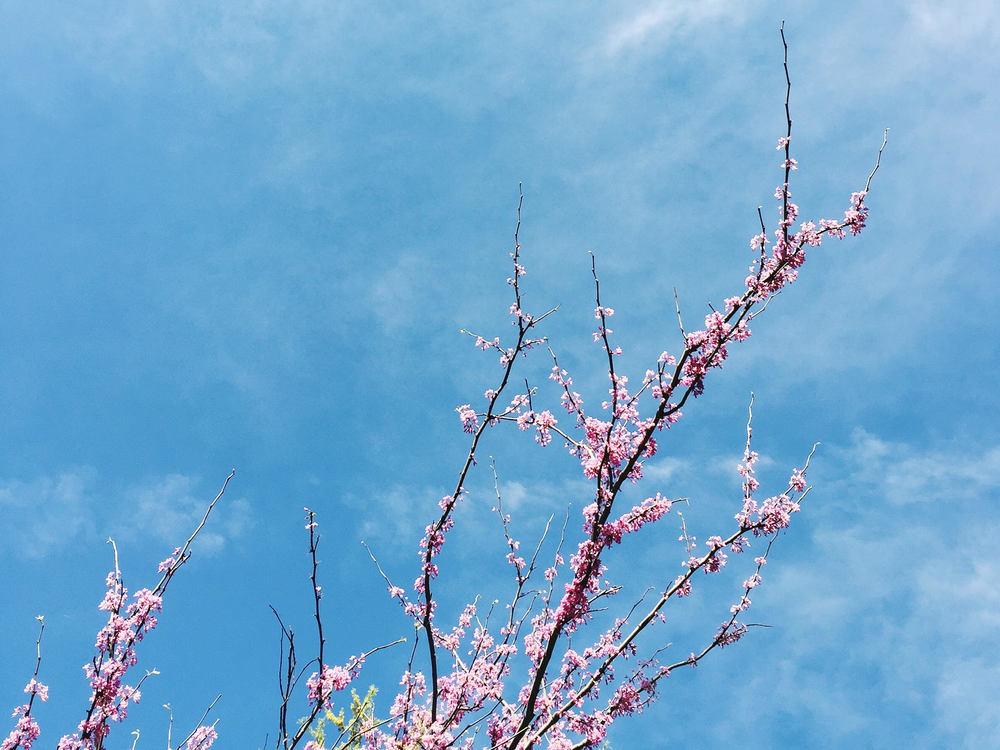 springtime in jacksonville