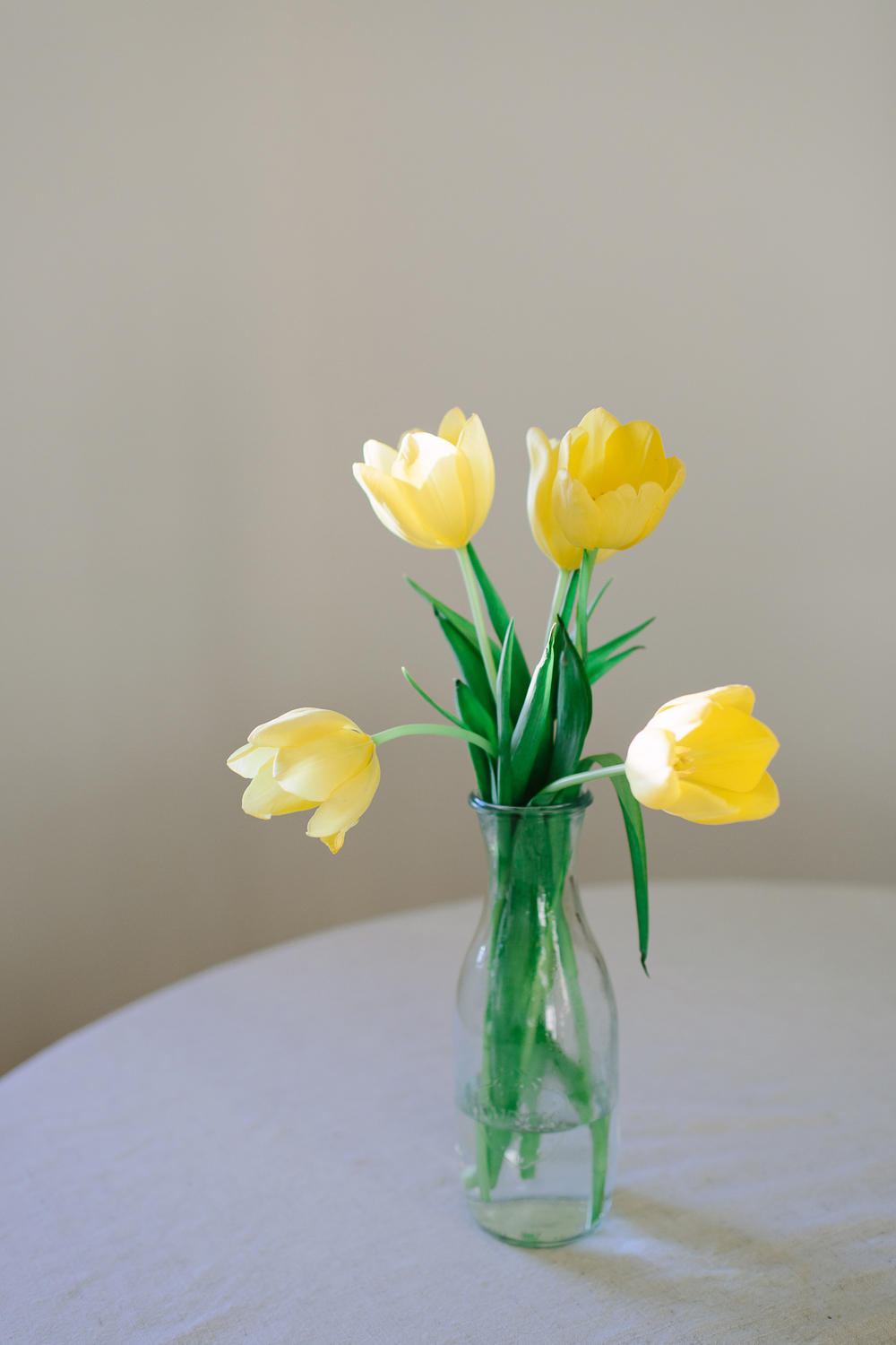 yellow tulips in spring