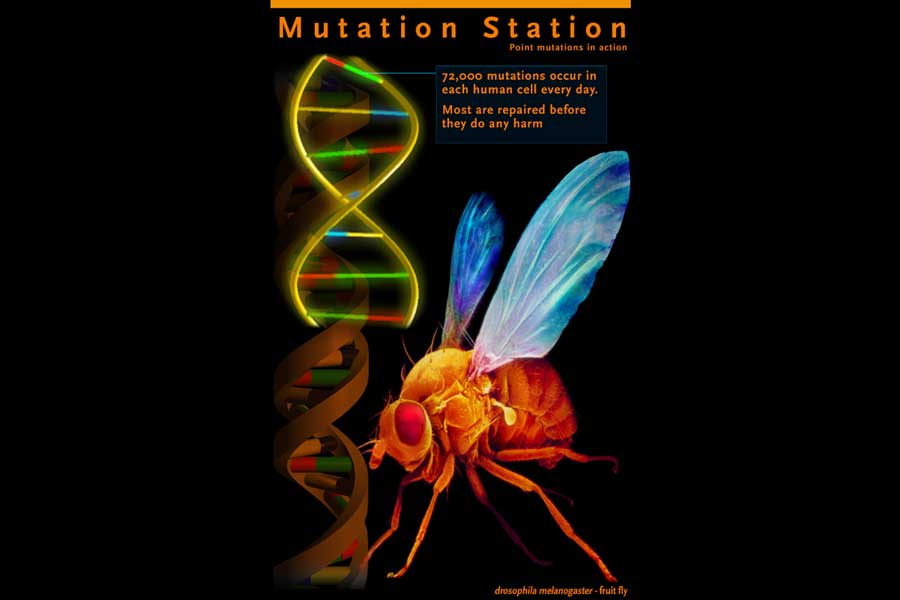 genome mutation station