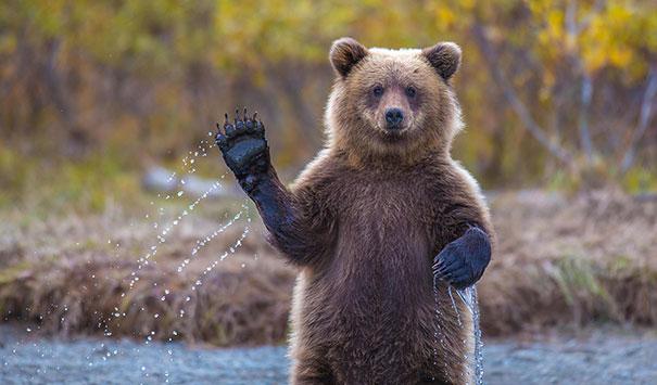 funny bear.jpg