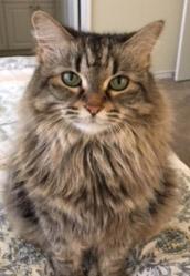 sophie cat.JPG