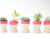 mini-planters-set-of-5-neon-pink-modern.jpeg