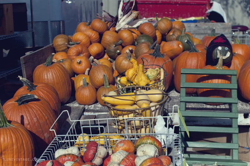 farmers+market+fall+lune+vintage+2012+-+8.png