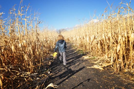 corn+maze+2011+%253D+4.jpg