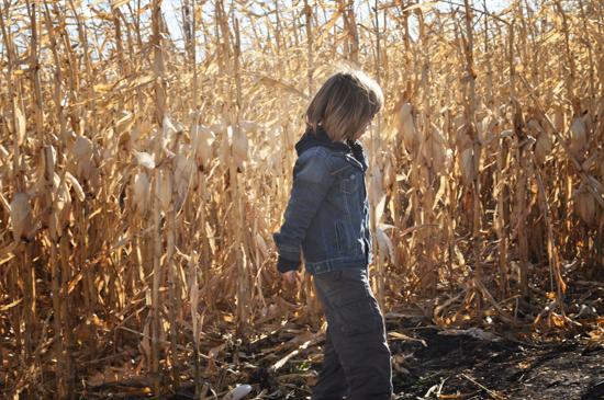 corn+maze+2011+-+3.jpg