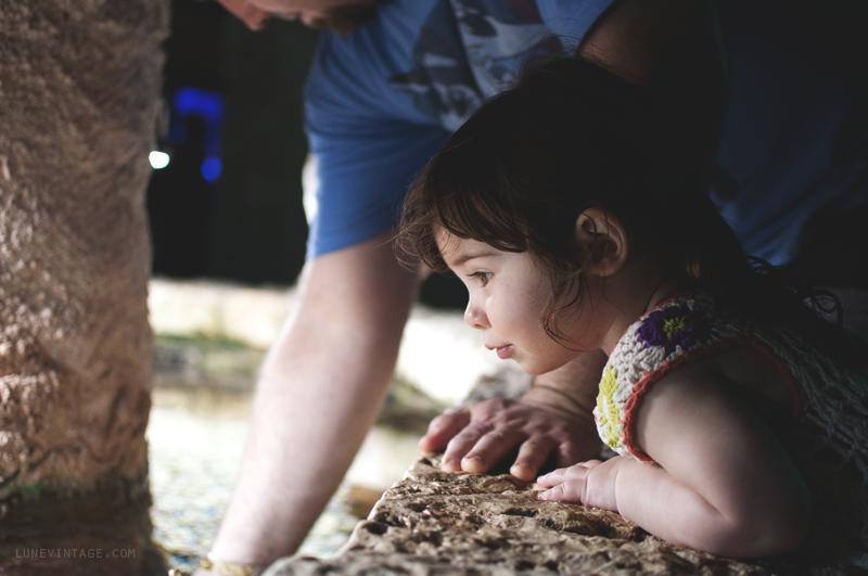 xcaret+park+aquarium+eve.png