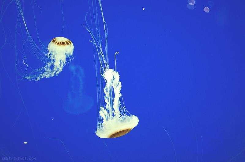 xcaret+park+aquarium+jellyfish+3.png