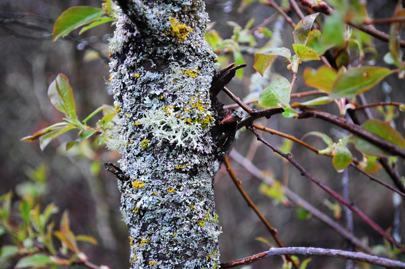 snake+forest+april+2012+-+2.jpg