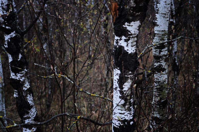 snake+forest+april+2012+-+5.jpg