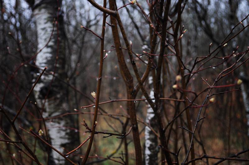 snake+forest+april+2012+-+4.jpg