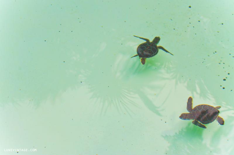 xcaret+park+aquarium+baby+sea+turtles.png
