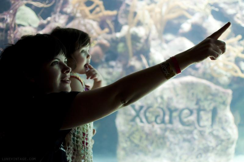 xcaret+park+aquarium.png