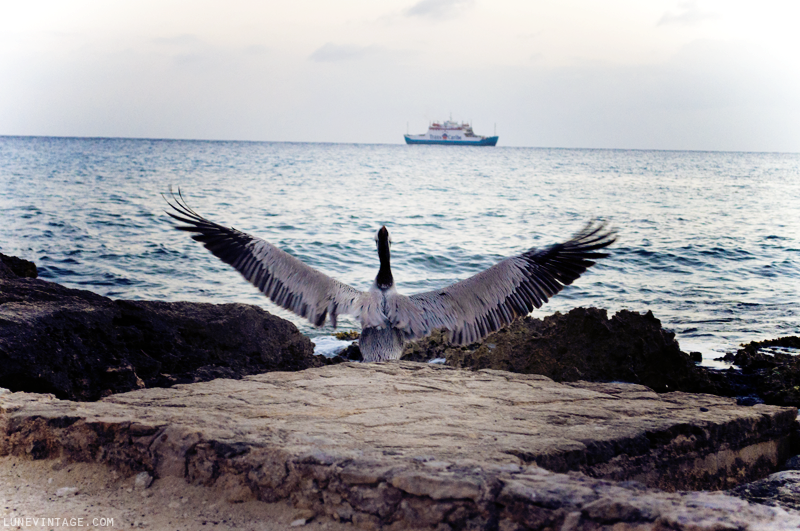 pelican+mexico+playa+del+carmen+lune+vintage.png