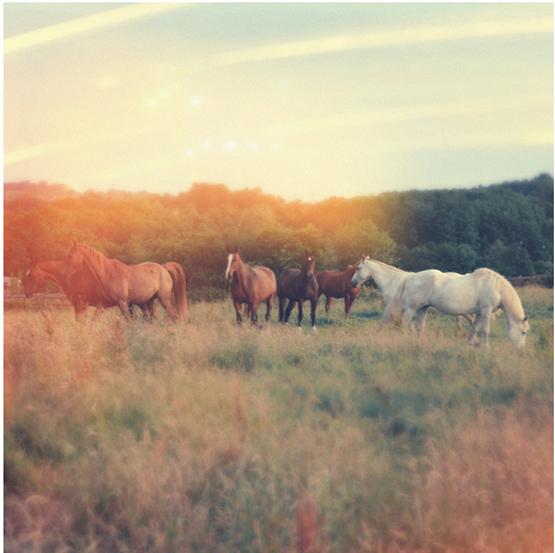 wild+horses+5.jpg