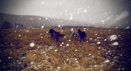 wild+horses+2.jpg