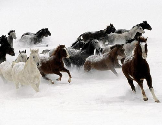 wild+horses+3.jpg