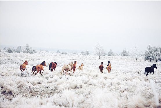 wild+horses+4.jpg