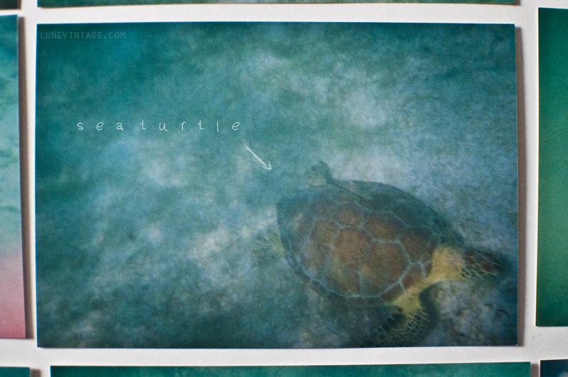 underwater+photos+snorkling+lune+vintage+2.png