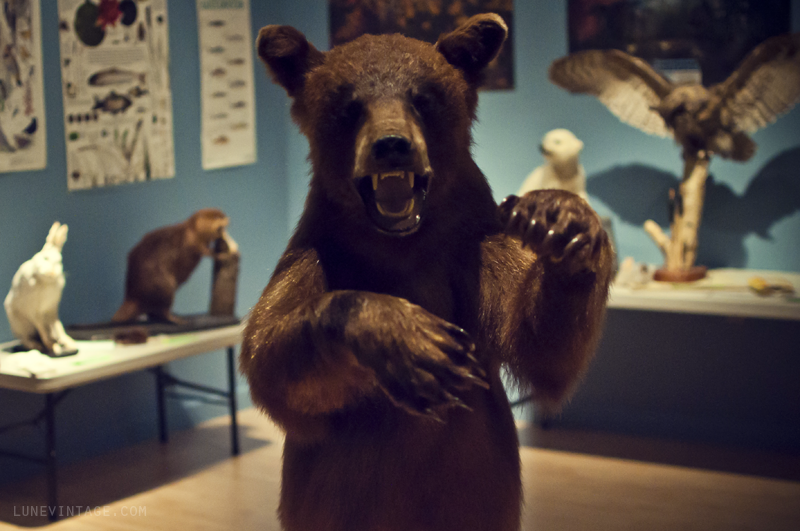 baby+bear+manitoba+museum+lune+vintage.png