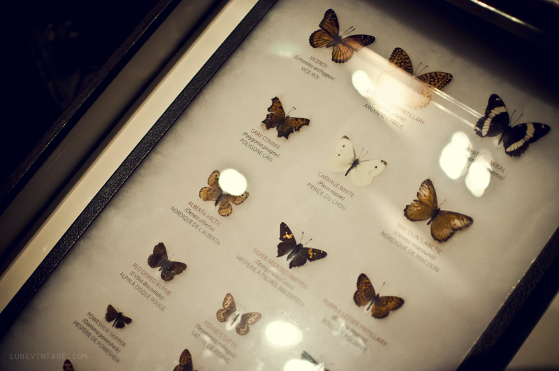 butterfly+manitoba+museum+lune+vintage.png