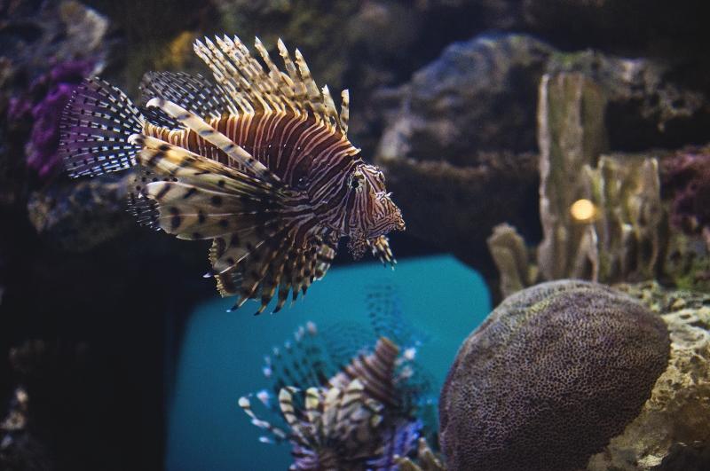Tropical fish at the Mandalay Bay Shark Reef.
