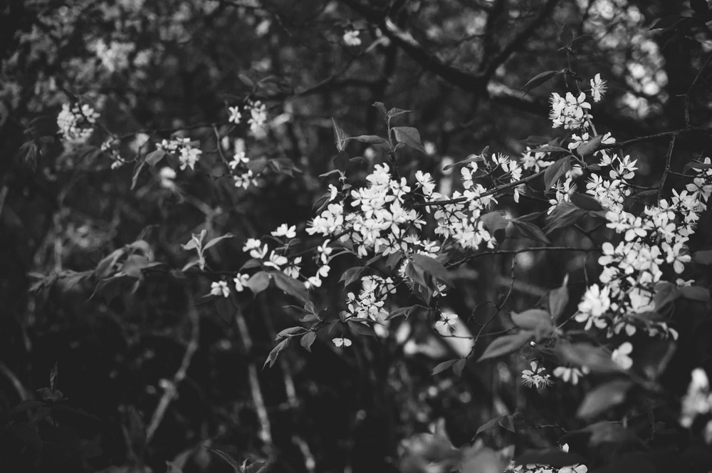 portrait eve spring woods 6 (1200x797).jpg