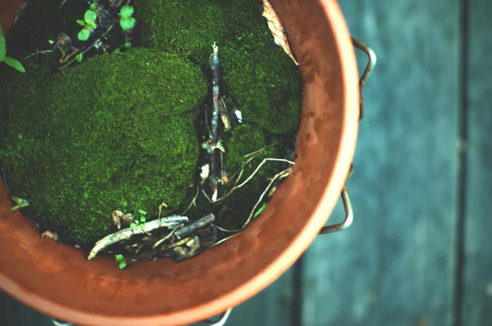 moss lune garden (1200x797).jpg