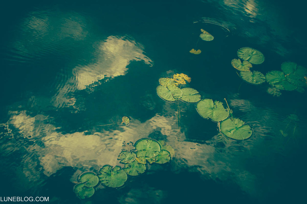 lily pads-1.jpg