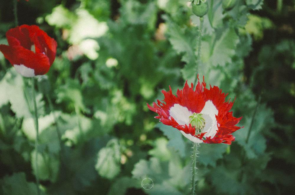 banff Cascade gardens lune vintage blog-2.jpg